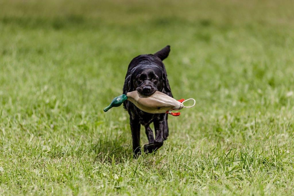 Sally hat die Ente gefunden