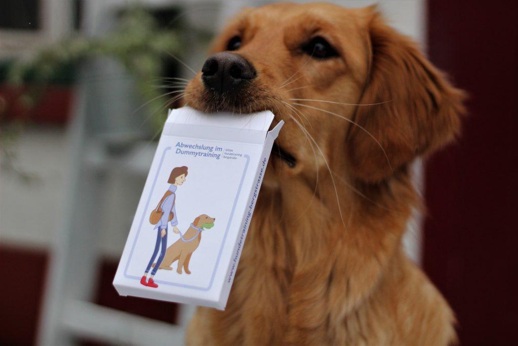 Uri freut sich über die Dummy-Karten